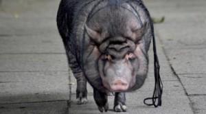 Demon-Pig