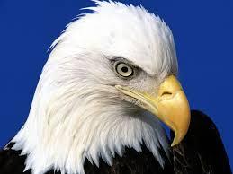 eagle-looks